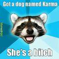 Dog pun