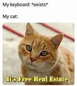 Cat real estate - meme
