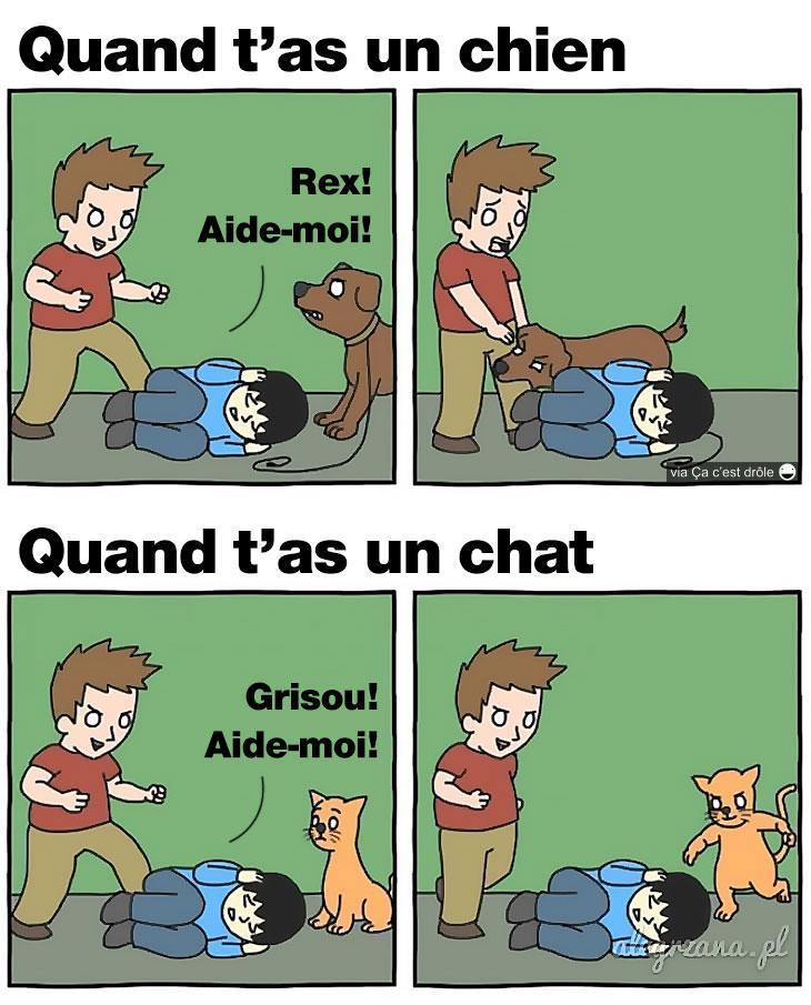 Chat vs chien