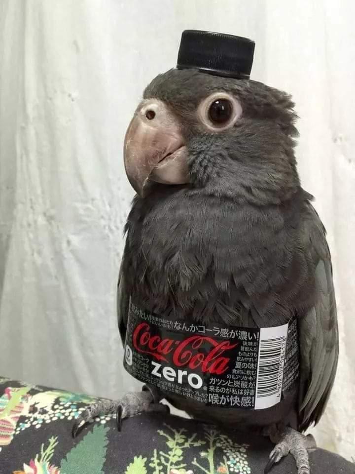 Nice birdo - meme