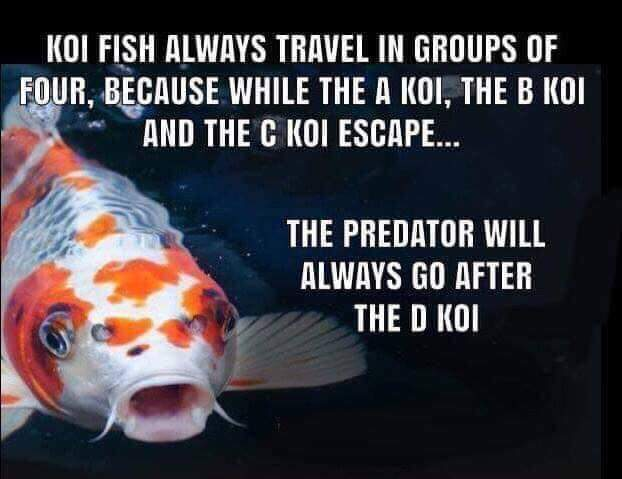 Don't be fake, otherwise you'll be the D Koi. - meme
