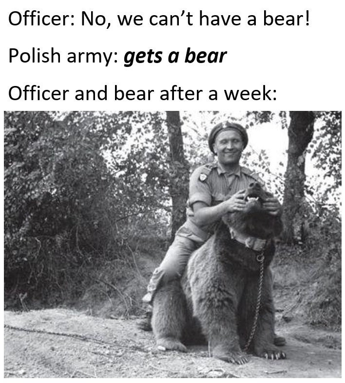 Wojtek the bear for those interested in reading about him - meme