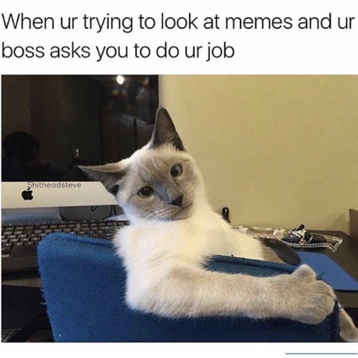 Good cat - meme
