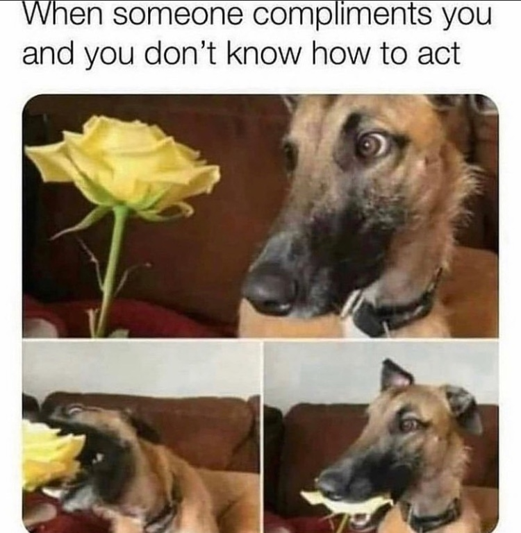 delicious rose - meme