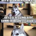 Blague nulle-5 #spécial humour noir