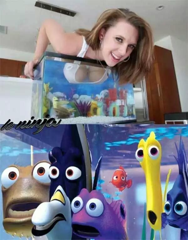 peixes - meme