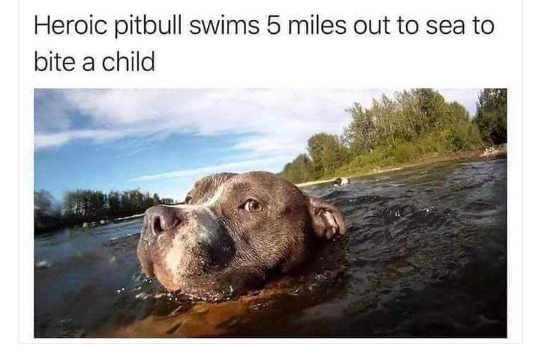 Heroic pitbull - meme