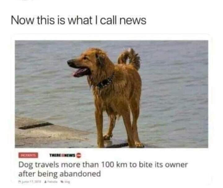 Good doggo, I hope doggo finds a forever home with an actually good owner - meme