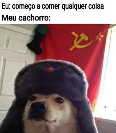 Cachorro soviético mesmo dane-se kkkkkk - meme