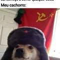 Cachorro soviético mesmo dane-se kkkkkk
