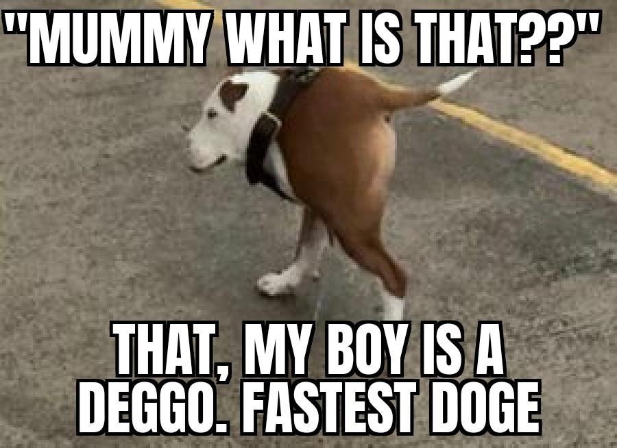 Meet deggo - meme