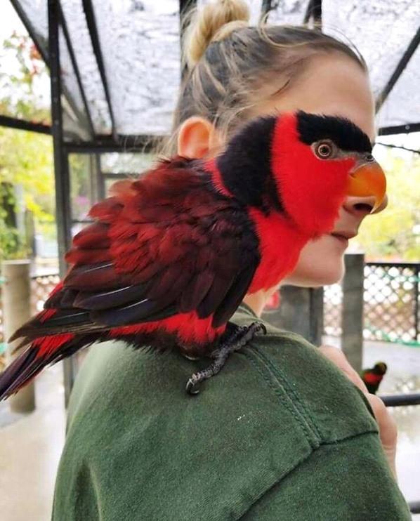 Mulher pássaro, só que não - meme