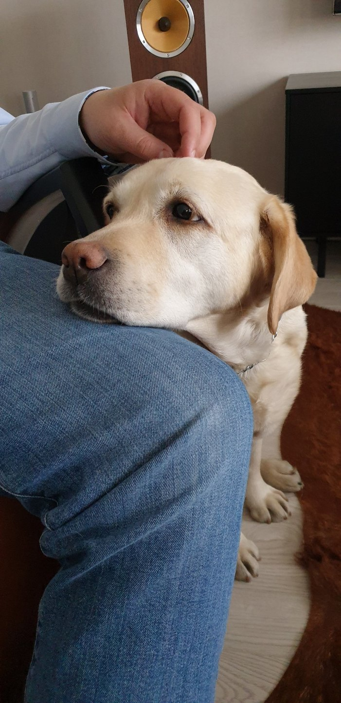 doggo likes resting her head on other people's legs - meme