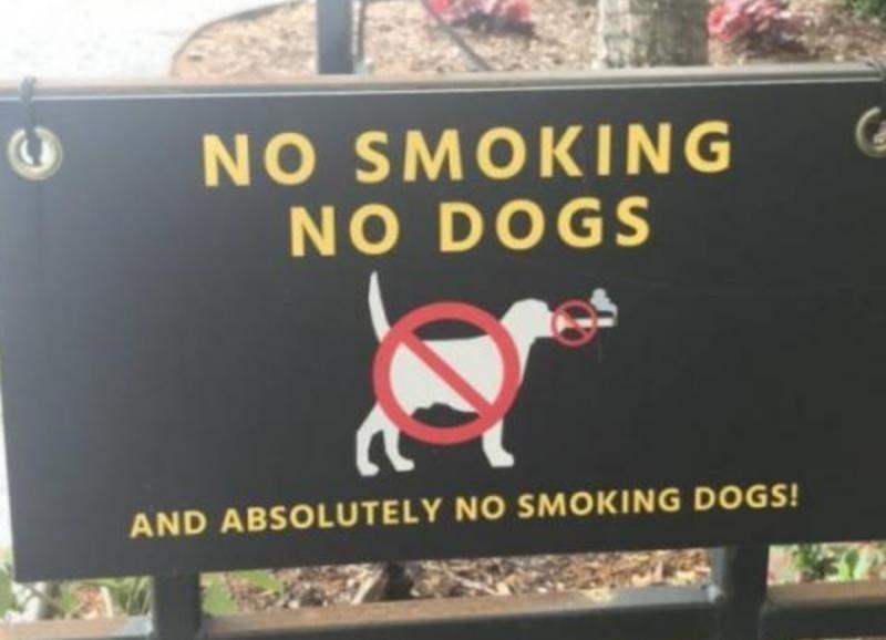No smoking dogs! - meme