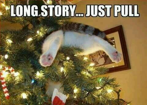 Cat in xmas tree - meme