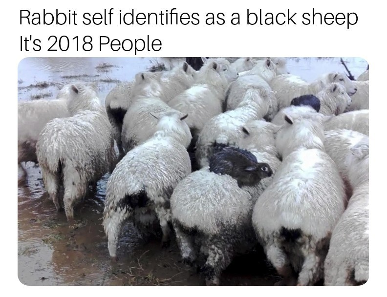 Trans - meme