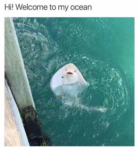 welcome! - meme