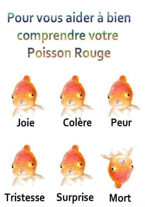 Les petits pois sont rouges - meme