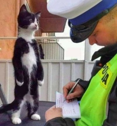 Catto is fined - meme