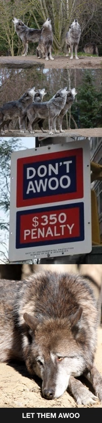 Let them AWOO - meme