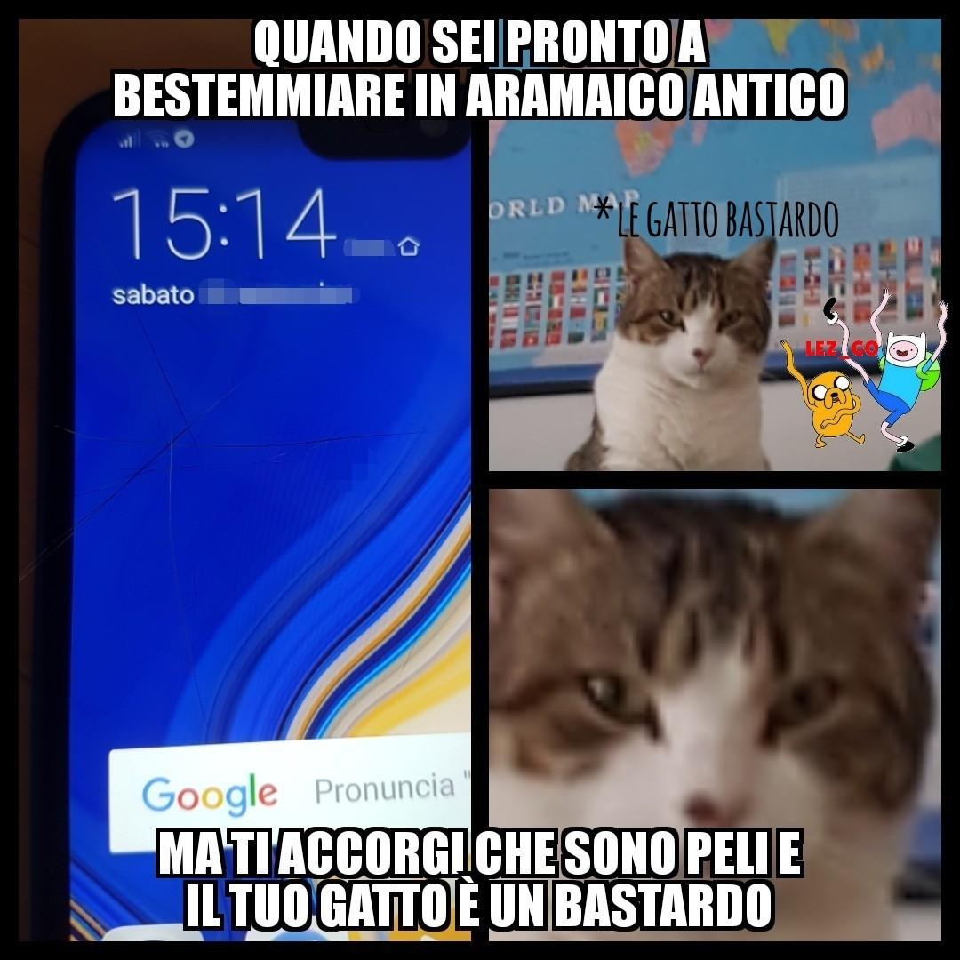 Cito la mia gatta:3 - meme