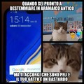 Cito la mia gatta:3