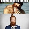 Wild Ginger vs Soy