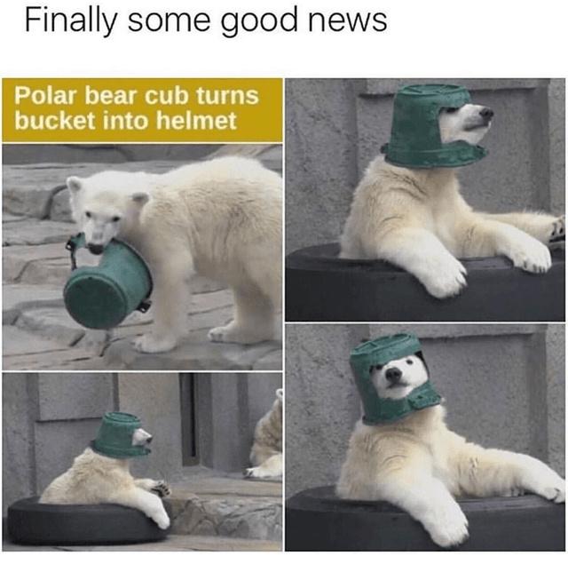 Finally some good news: polar bear cub turns bucket into helmet - meme
