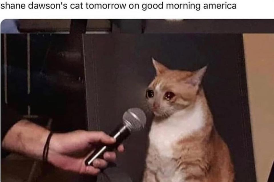 Shane Dawson - meme