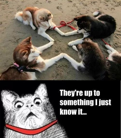 They are summoning the greatest pup - meme