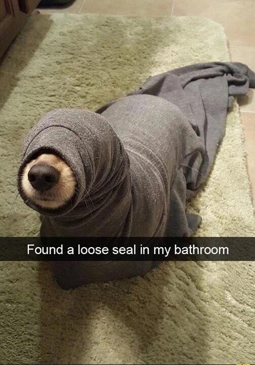 doggo return to ocean - meme