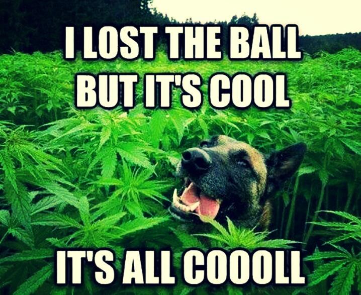 it's cool, no problem! - meme