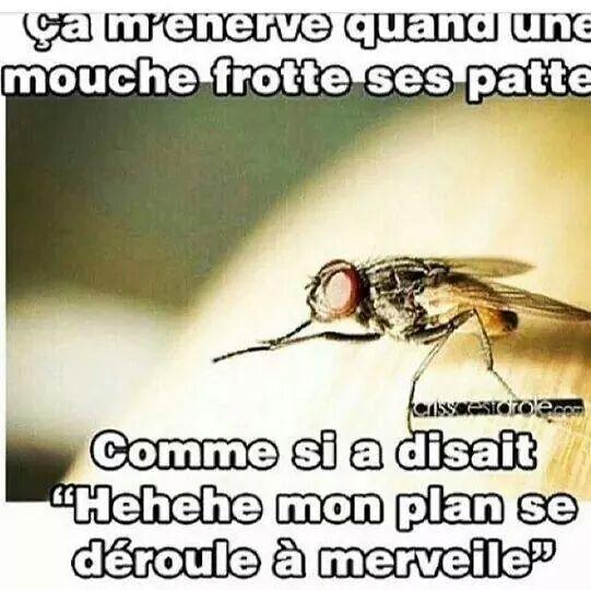 moucheee ! - meme