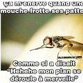 moucheee !
