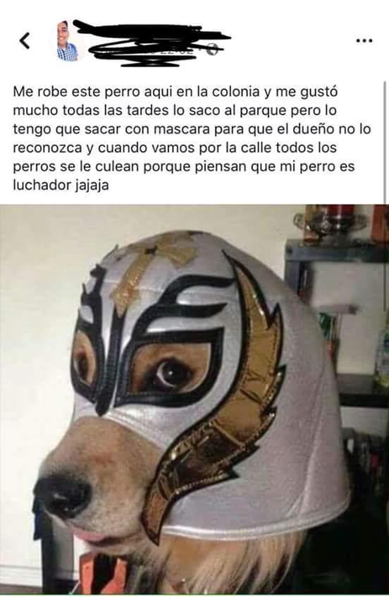 perro luchon - meme