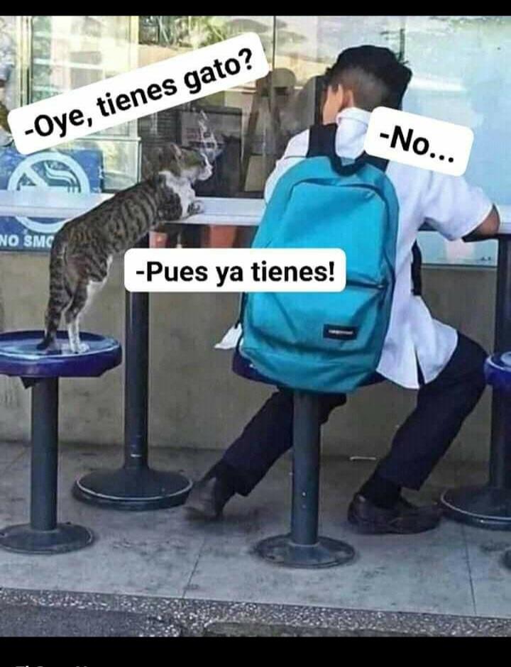 Tienes gatos.... - meme
