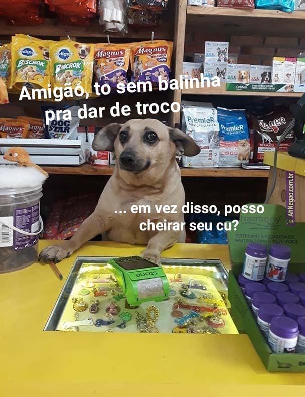 Cachorro - meme