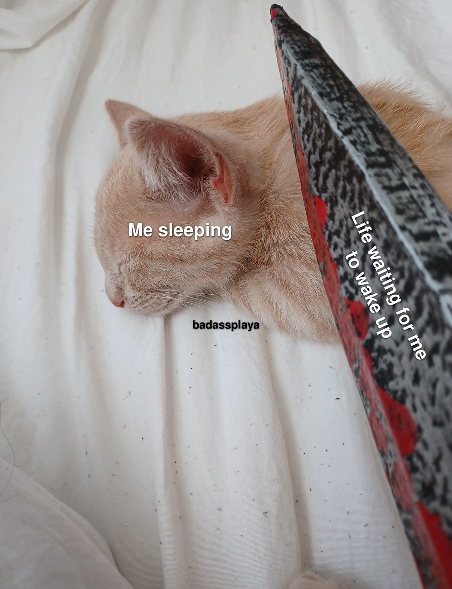 Yes, that's one of my cats - meme