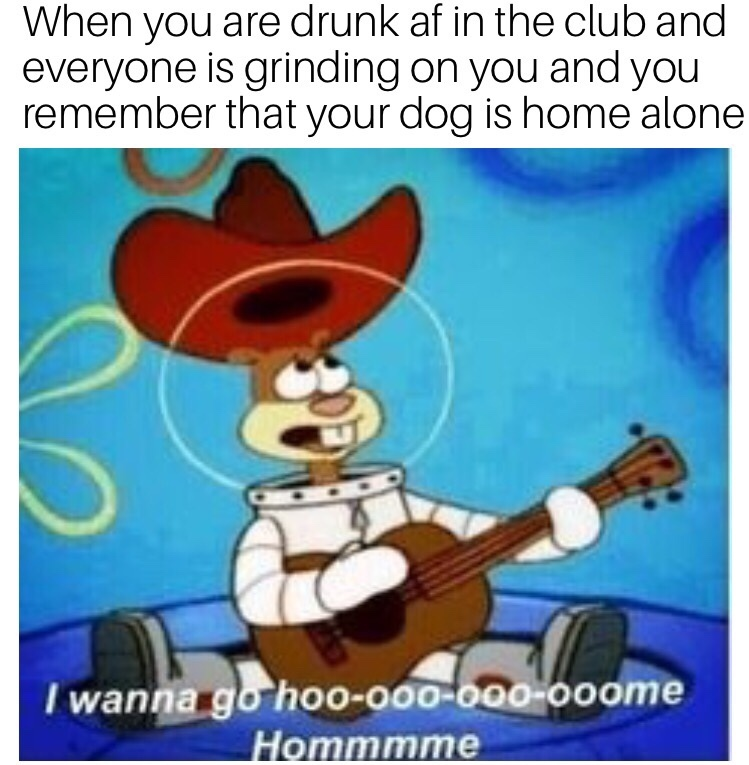 home is where the doggo is - meme