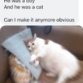 Shane Dawson did not fuck his cat