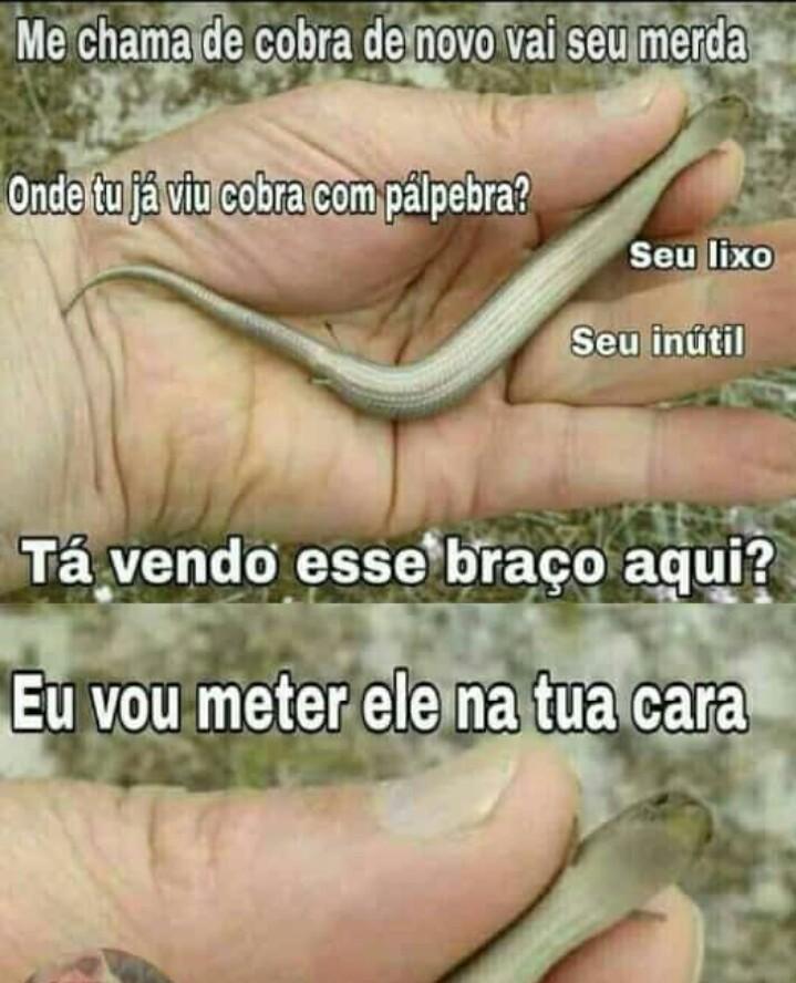 Kobra - meme