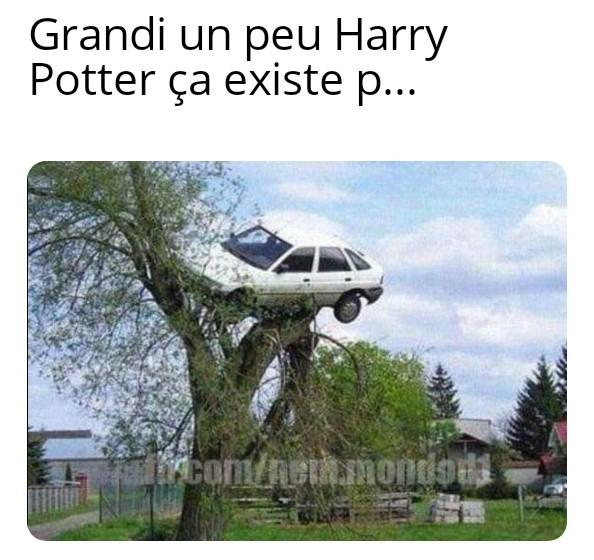 Les voitures poussent sur les arbres - meme