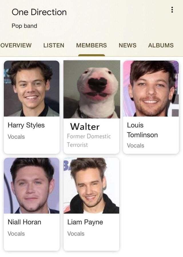 funny meme DOG!!!
