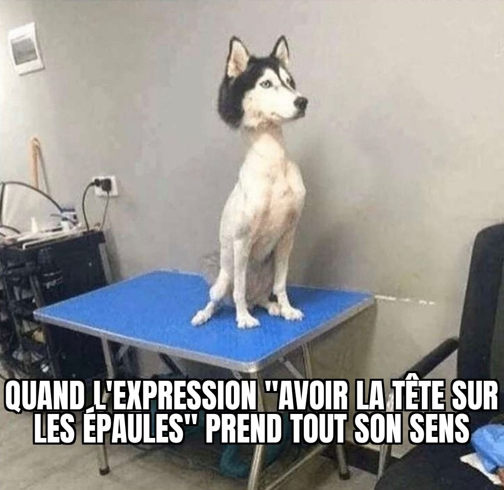 Lolo aime les chiens - meme