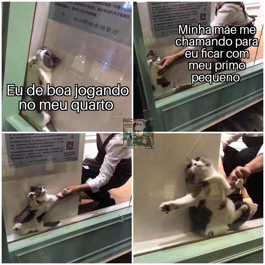 Meme de gato