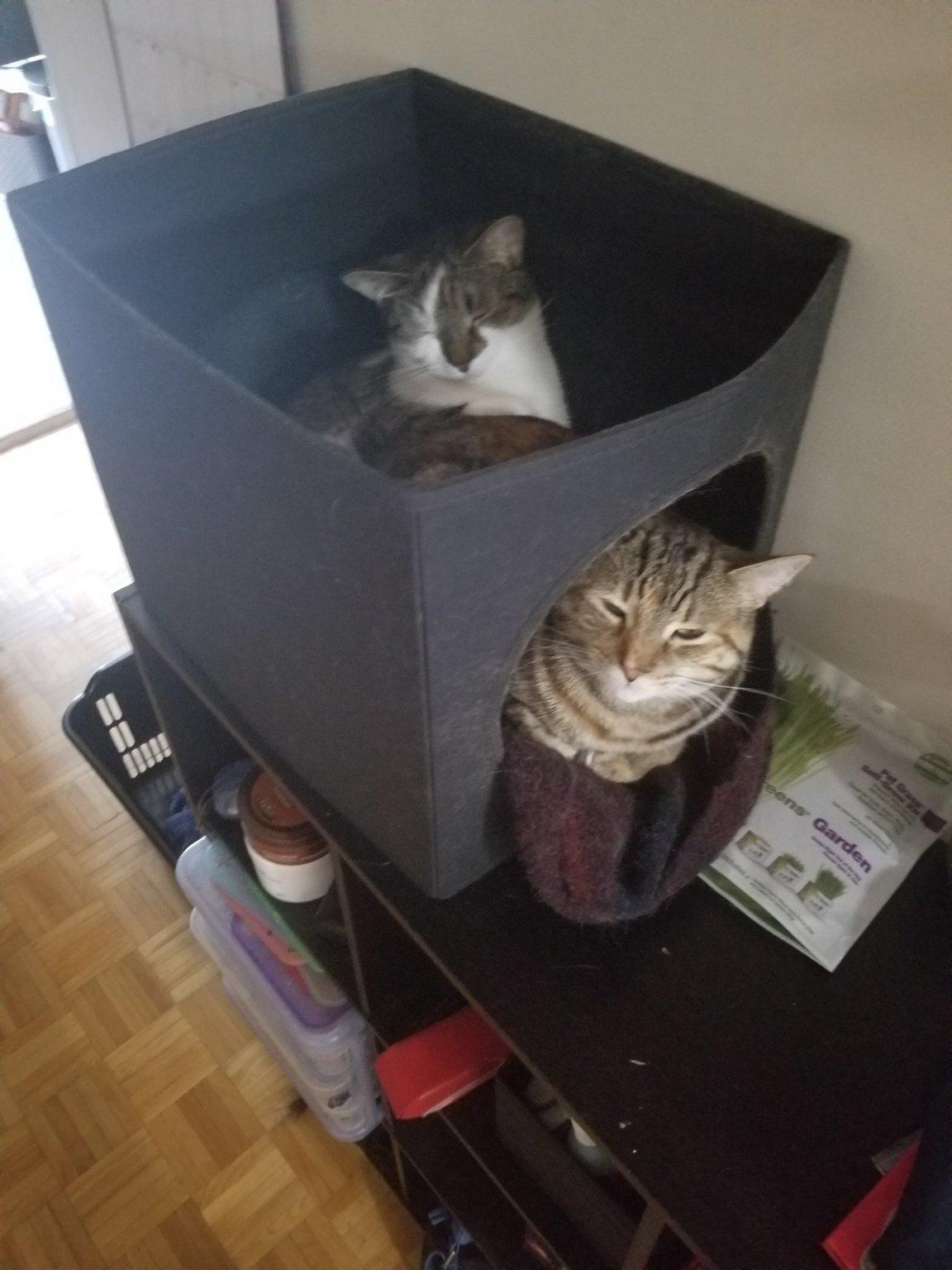 Cat with cat - meme