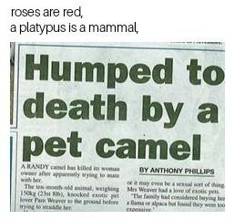I love British newspapers - meme