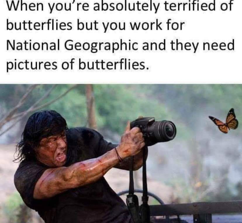 Rambo vs. Butterfly - meme