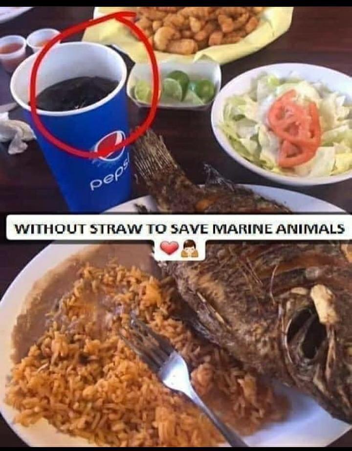 Remember kids we have to save marine animals - meme