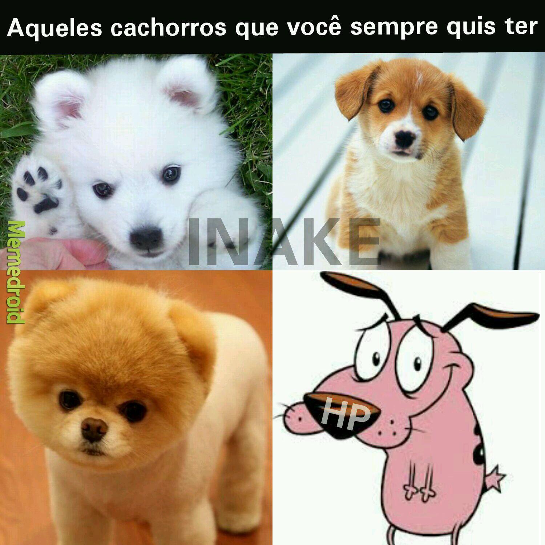 Cachorro idiota!! - meme
